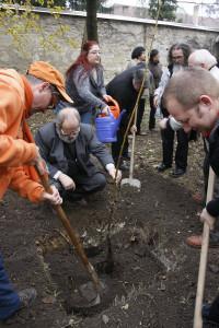 Alapítás, diófa ültetés 2009.11.14. (41)